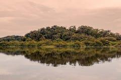 Wildernis uit de Amazone met Dichte Vegetatie Royalty-vrije Stock Afbeelding