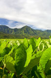 Wildernis van Hawaï Royalty-vrije Stock Afbeelding