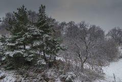 Wildernis in wintertijd Stock Fotografie