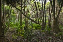 Wildernis in Zanzibar stock foto's