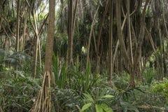 Wildernis in Zanzibar royalty-vrije stock foto
