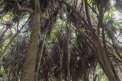 Wildernis in Zanzibar royalty-vrije stock afbeeldingen