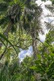 Wildernis in Zanzibar stock foto