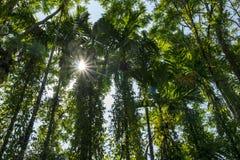 Wildernis, zon die filters door de bomen Stock Fotografie