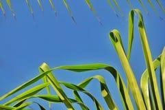 Wildernisachtergrond van palmbladen Stock Foto
