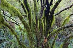 Wildernisboom in regenwoud royalty-vrije stock fotografie