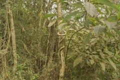 Wildernislandschap bij Iguazu-Park Royalty-vrije Stock Afbeeldingen