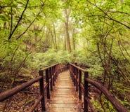 Wildernislandschap in uitstekende stijl Houten brug bij tropische rai Royalty-vrije Stock Foto's