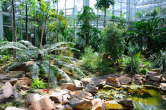 Wildernissen in Palmen Garten, Frankfurt-am-Main, Hessen, Duitsland Stock Afbeelding