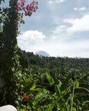 Wildernissen van Bali Stock Afbeelding
