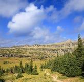 Wildernissleep in het Provinciale Park van Waterton, Alberta, Canada Stock Afbeeldingen