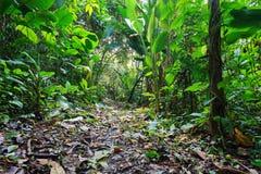 Wildernisvoetpad door weelderige tropische vegetatie Stock Foto