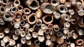 Wildes alleines Fliegen Bienen Osmia Bicornis vor einem Insektenhotel-Schutzkasten im Frühjahr gemacht vom hölzernen Stamm, Bambu stock video footage