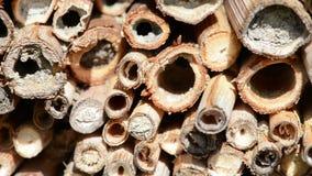 Wildes alleines Fliegen Bienen Osmia Bicornis vor einem Insektenhotel-Schutzkasten im Frühjahr gemacht vom hölzernen Stamm, Bambu stock footage