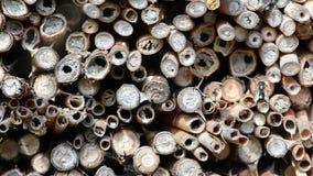 Wildes alleines Fliegen Bienen Osmia Bicornis vor einem Insektenhotel-Schutzkasten im Frühjahr gemacht vom hölzernen Stamm, Bambu stock video