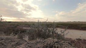 Wildes blühendes Feld auf Sonnenunterganghintergrund stock footage