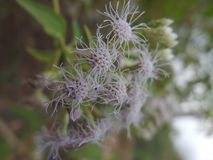 wildes bushes& x27; s-Blume Lizenzfreies Stockfoto
