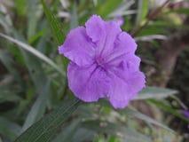 wildes bushes& x27; s-Blume stockfotografie