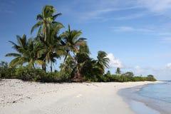 Wildes Coco-Palm Beach Stockbild