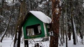 Wildes Eichhörnchen, das auf dem Baum und dem Essen sitzt stock footage