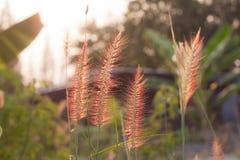 Wildes Feld des Grases auf Sonnenuntergang Lizenzfreies Stockfoto
