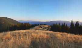 Wildes Feld des Grases in den Carpatian-Bergen bei dem Sonnenuntergang Stockbild