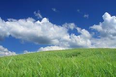 Wildes Feld des Sommers Stockfotografie