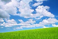 Wildes Feld des Sommers Lizenzfreies Stockfoto