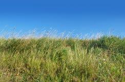 Wildes Feld und blauer Himmel Stockfoto