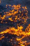 Wildes Feuer Lizenzfreie Stockbilder