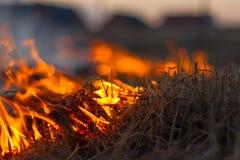 Wildes Feuer Lizenzfreies Stockbild