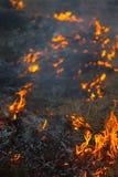 Wildes Feuer Stockbilder
