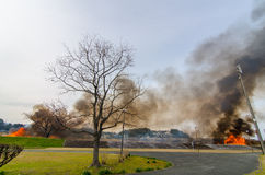 Wildes Feuer im tsuboigawa, Kumamoto, Japan Stockfotografie