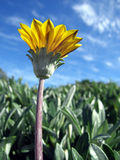 Wildes flower3 Lizenzfreie Stockfotografie