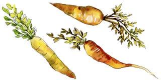 Wildes Gemüse der orange Karotte in einer Aquarellart lokalisiert Lizenzfreies Stockfoto