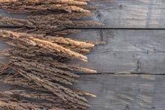 Wildes Getreidegras auf hölzernem Hintergrund mit Kopienraum Lizenzfreie Stockbilder