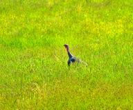 Wildes grünes Gras der Türkei Lizenzfreie Stockbilder