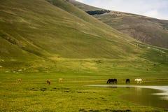 Wildes grünes Tal mit Pferden Stockfotografie