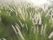 Wildes Gras lizenzfreie stockfotografie