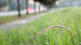 Wildes Gras, das am Straßenrand blüht Lizenzfreies Stockbild