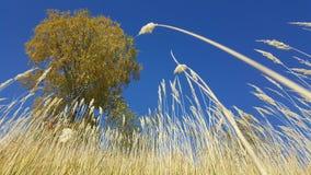 Wildes Gras in der Landschaft Lizenzfreies Stockfoto
