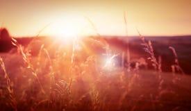 Wildes Gras in der Natur auf einem Sonnenunterganghintergrund Lizenzfreie Stockbilder