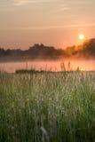 Wildes Gras durch einen Sumpf Stockbild