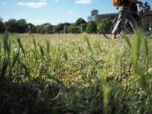 Wildes Gras in einem Park mit Leuten im Hintergrund lizenzfreie stockbilder