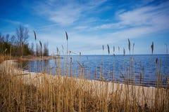 Wildes Gras eines Stocks auf dem See Stockfotos