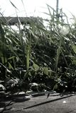 Wildes Gras im Sonnenuntergang lizenzfreie stockfotografie
