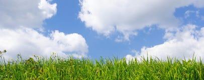 Wildes Gras und blauer Himmel Stockfotos