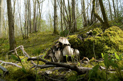 Wildes Holz stockfotografie