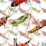 Wildes Insekt der exotischen Grillen in einem Aquarellartmuster Stockbild