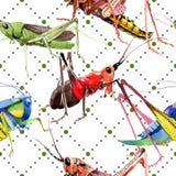 Wildes Insekt der exotischen Grillen in einem Aquarellartmuster Lizenzfreie Stockbilder